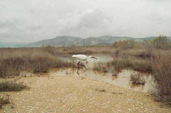 www.petroskoublis.com